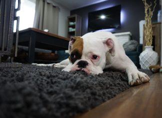 טיפים לתיקון שטיחים